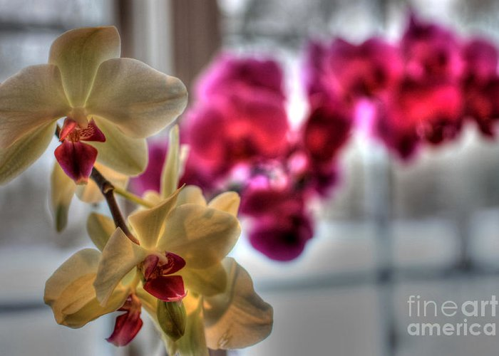 Orchids Greeting Card featuring the photograph Orchids by David Bearden