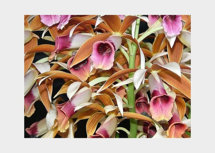 The Orchids Mass Together In The Tones Of Pink And Carmel. It's A Richly Detailed Photo Of One Of The Most Beautiful Of Tropical Flowers. Greeting Card featuring the photograph Orchids In Bloom by Mindy Newman