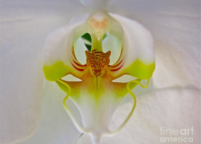 Flower Greeting Card featuring the photograph Orchids Secret by PJ Cloud