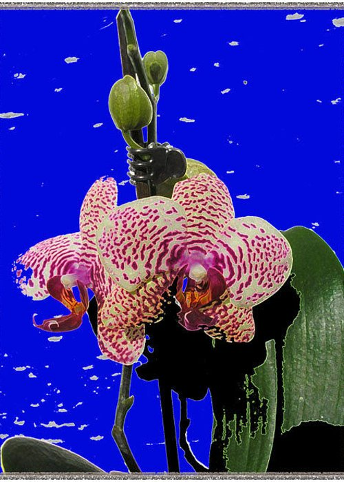 Orchids Greeting Card featuring the photograph Orchids by Shirley anne Dunne