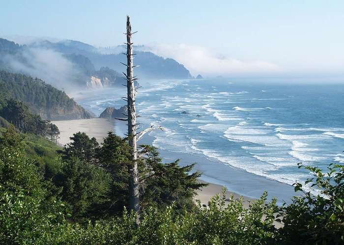 Beach Oregon Greeting Card featuring the photograph Oregon Beach by James Johnstone