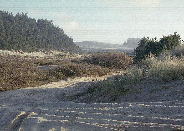 Oregon Dunes National Recreation Area Greeting Card featuring the photograph Oregon Dunes 5 by Eike Kistenmacher