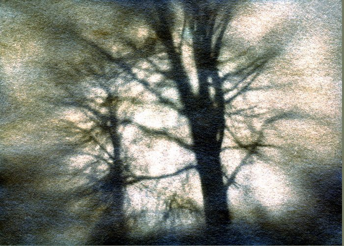 Trres Greeting Card featuring the photograph Original Tree by Diana Ludwig