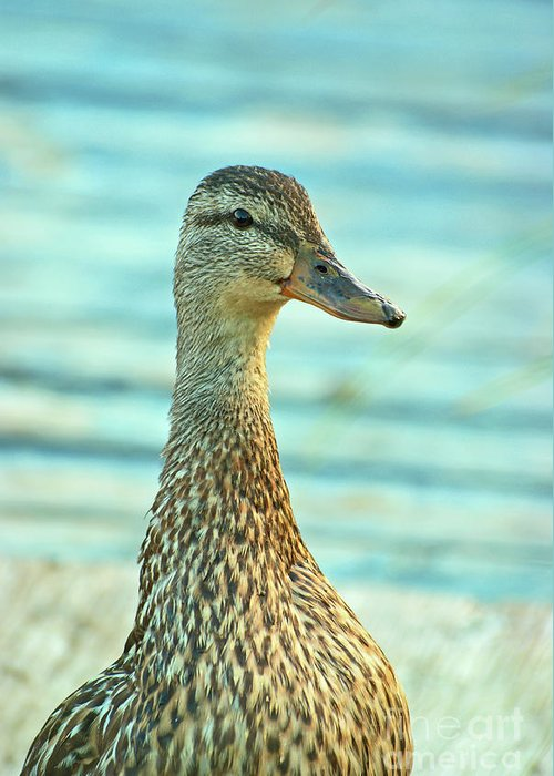 Duck Prints Greeting Card featuring the photograph Oscar Le Canard by Aimelle