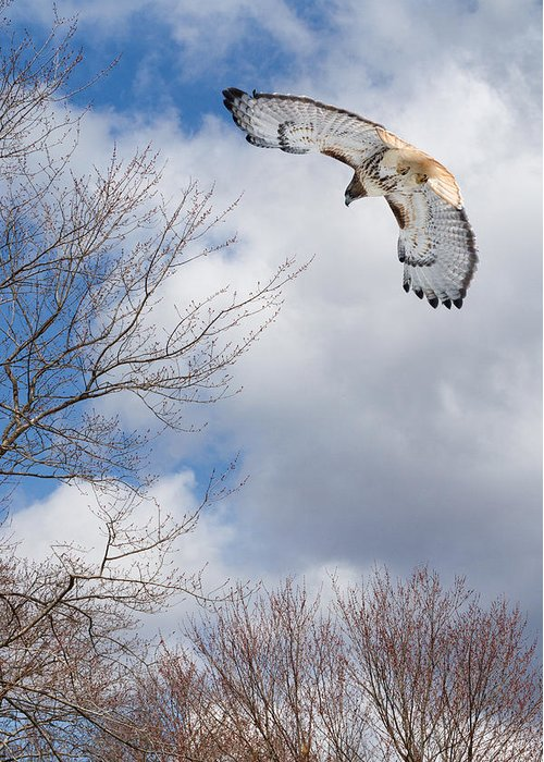 Redtail Hawk Greeting Card featuring the photograph Out Of The Blue by Bill Wakeley
