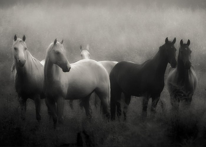 Horse Greeting Card featuring the photograph Out of the Mist by Ron McGinnis