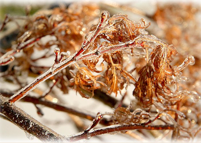 Winter Greeting Card featuring the photograph Out On A Limb by Lita Kishbaugh
