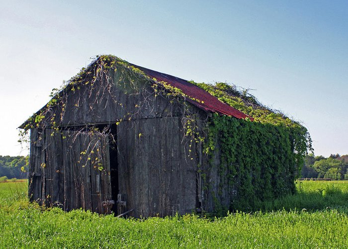 Barns Greeting Card featuring the photograph Out To Pasture by Joy Tudor