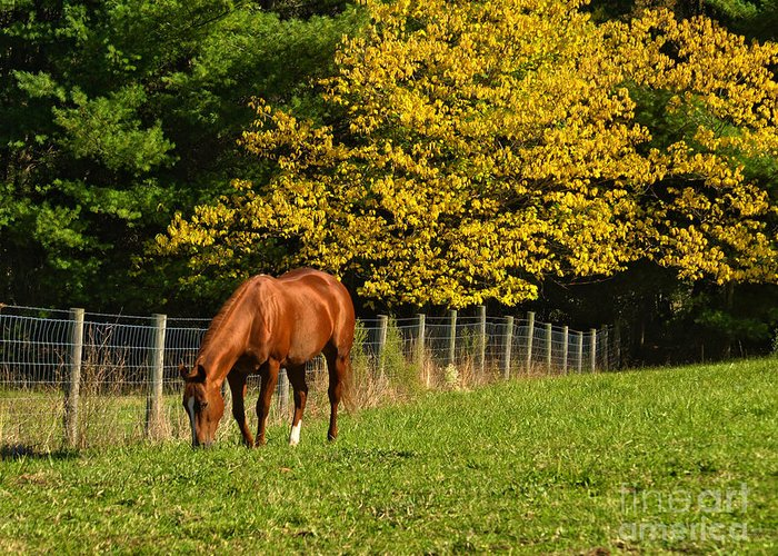 Horse Greeting Card featuring the photograph Out To Pasture by Kathy Jennings