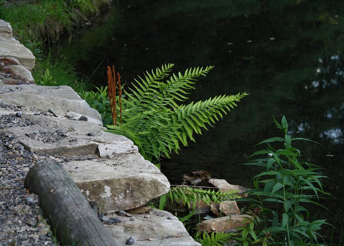 Ferns Greeting Card featuring the photograph Over The Edge by Darlene Bell