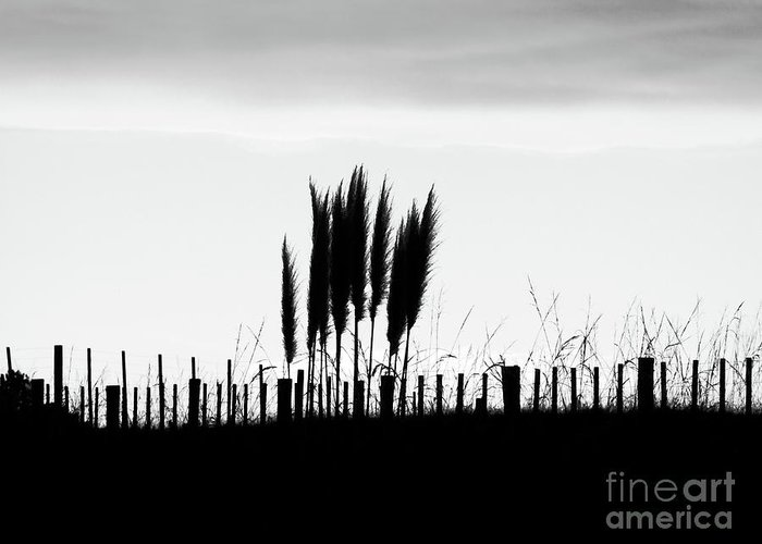 Fence Greeting Card featuring the photograph Over The Fence by Karen Lewis