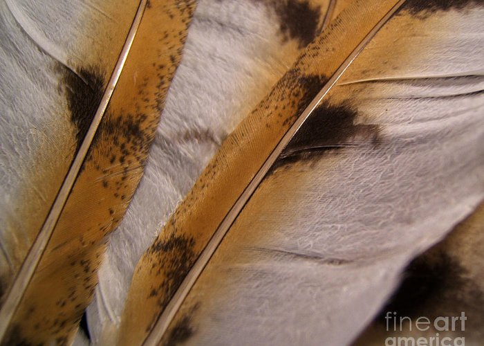 Artoffoxvox Greeting Card featuring the photograph Owl Feathers Photograph by Kristen Fox