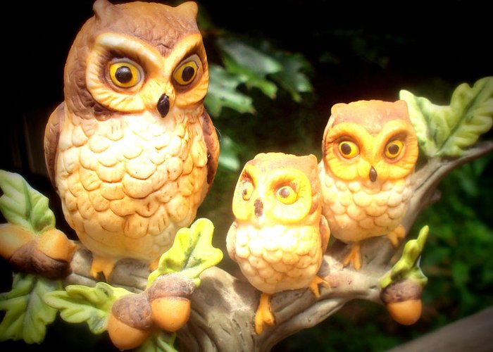 Owl Greeting Card featuring the photograph Owl Trio by Jennifer Coleman
