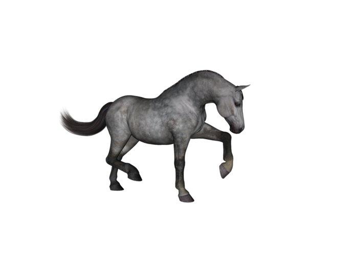 Warmblood Horse Greeting Cards