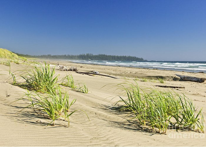 Pacific Greeting Card featuring the photograph Pacific Ocean Shore On Vancouver Island by Elena Elisseeva