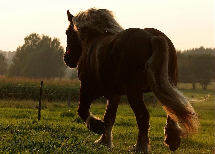 Sunset Horse Greeting Card featuring the photograph Painted By Sun by Adam Szewczak