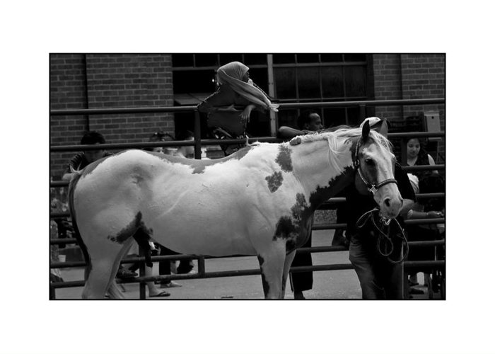 Horse Greeting Card featuring the photograph Painted Horse by Filipe N Marques
