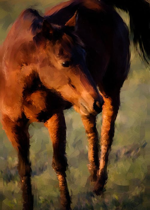 Horse Greeting Card featuring the photograph Painted Tele by Janice M LeCocq