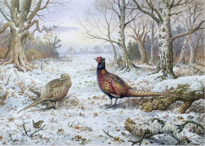 Game Bird; Snow; Woodland; Perdrix; Faisan; Troglodyte; Pheasant; Pheasants; Tree; Trees; Bird; Animals Greeting Card featuring the painting Pair Of Pheasants With A Wren by Carl Donner