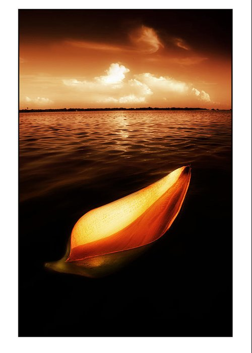 Palm Greeting Card featuring the photograph Palm Leaf Sheath Boat by Mal Bray