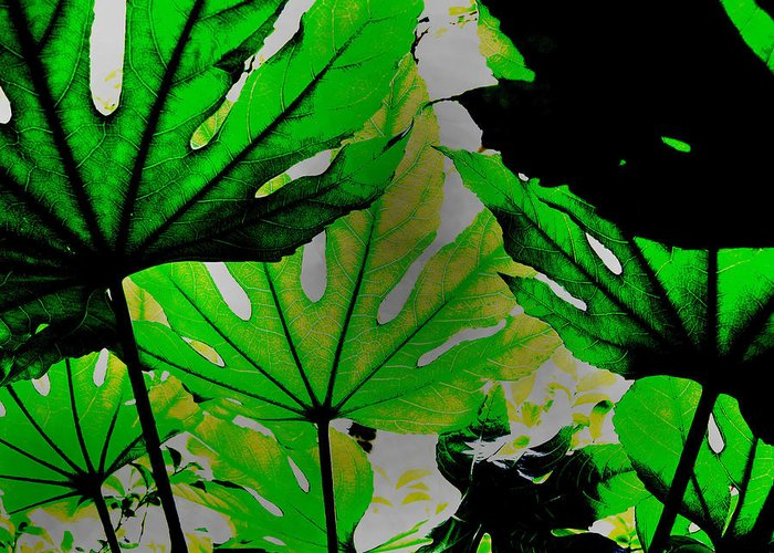 Palm Leaves Greeting Card featuring the photograph Palm Leaves by Steven Corie