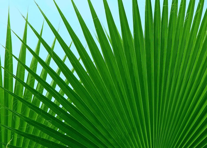 Palm Greeting Card featuring the photograph Palm Leaves by Susan Wall