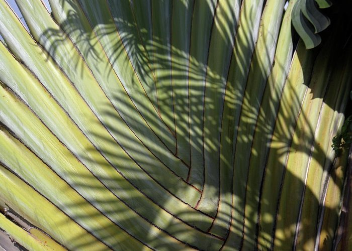 Wall Art Greeting Card featuring the photograph Palm On Palm by Alex England
