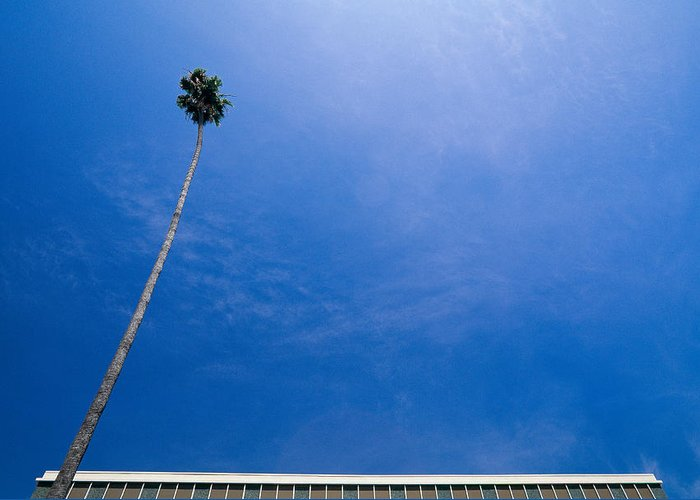 Blue Sky Greeting Card featuring the photograph Palm Tree And Building by Rich Iwasaki