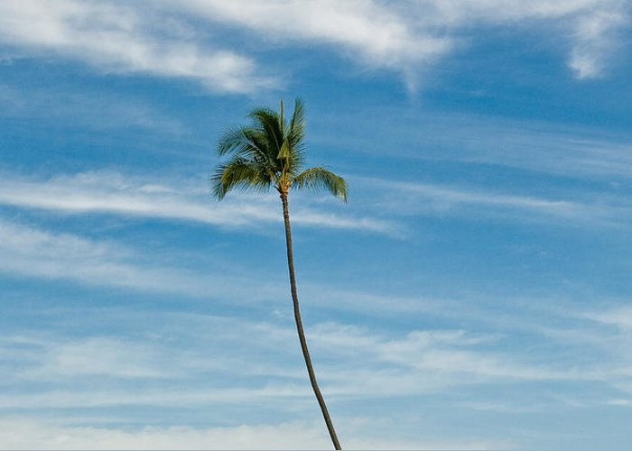 Blue Sky Greeting Card featuring the photograph Palm Tree And Clouds by Rich Iwasaki