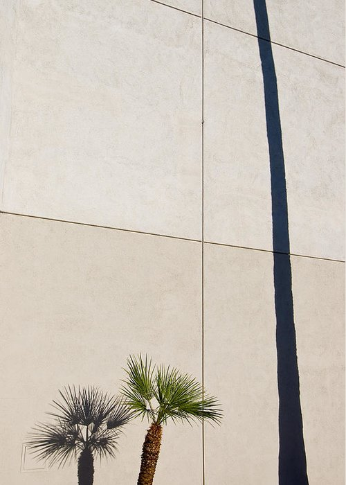 Palm Tree Greeting Card featuring the photograph Palm Tree And Shadows by Rich Iwasaki