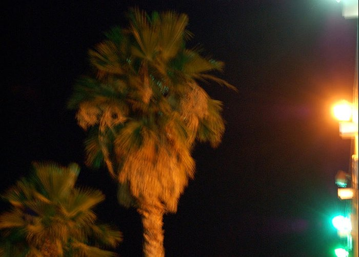Palm Tress Greeting Card featuring the photograph Palm Tree Glow by Heather S Huston