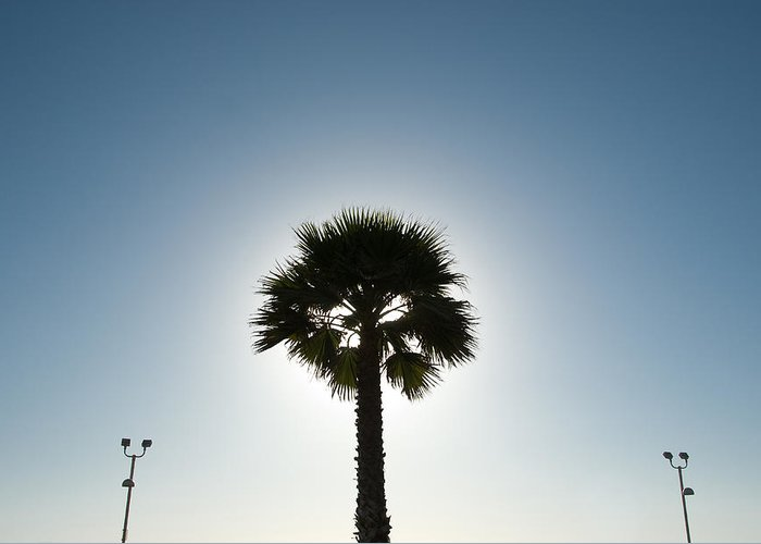 Greeting Card featuring the photograph Palm Tree Silhouette by Rich Iwasaki