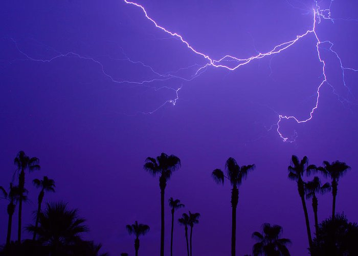 Lightning Greeting Card featuring the photograph Palm Trees And Spider Lightning Striking by James BO Insogna