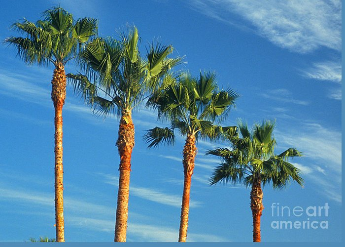 Palm Trees Greeting Card featuring the photograph Palm Trees by Marc Bittan