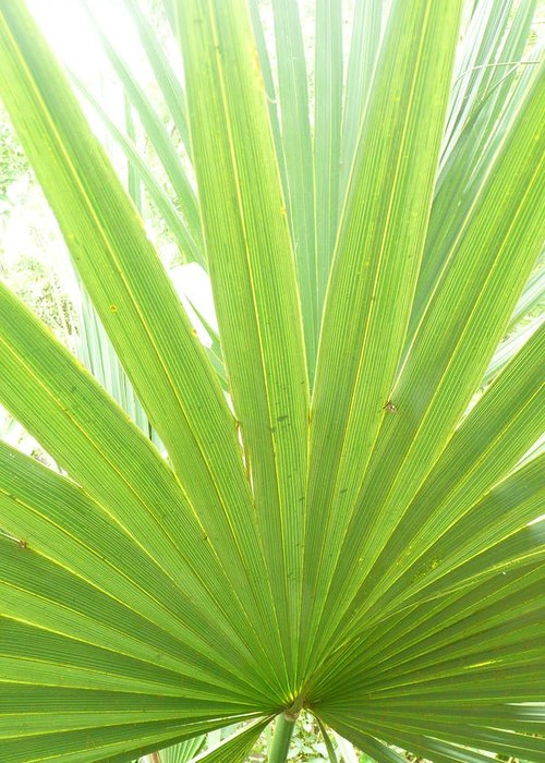 Green Greeting Card featuring the photograph Palmetto by Kathy Schumann