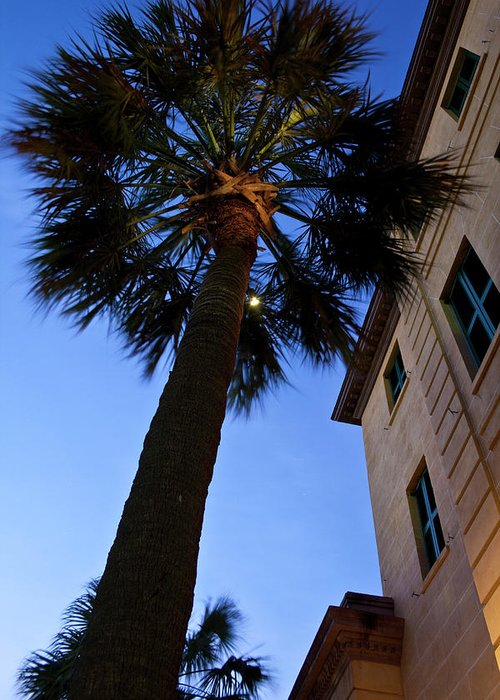 Palmetto Tree Greeting Card featuring the photograph Palmetto Tree by Witt Lacy