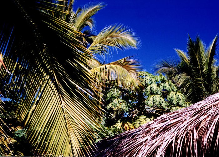 Palms Greeting Card featuring the photograph Palms All Around 2 by Lyle Crump