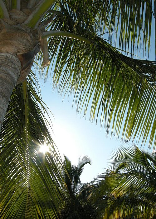 Palm Tree Greeting Card featuring the photograph Palms by Audrey Venute