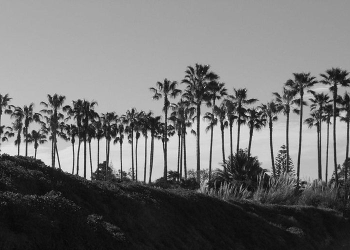 Landscapes Greeting Card featuring the photograph Palms by Shari Chavira