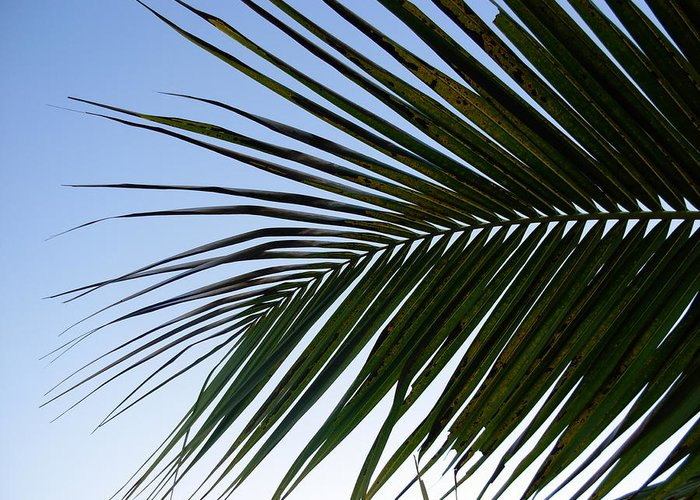 Palm Tree Greeting Card featuring the photograph Palms To The Sky by Amanda Vouglas