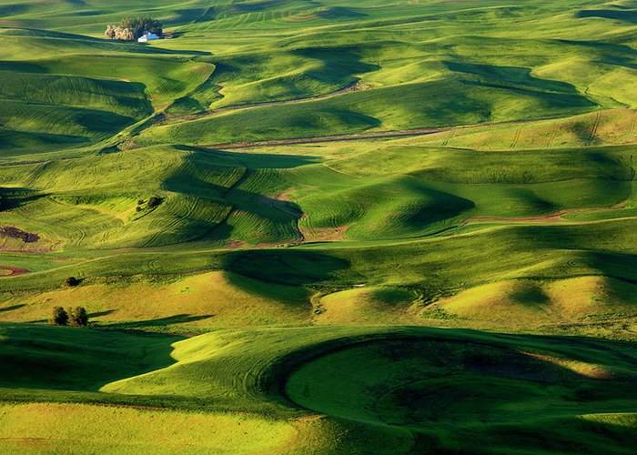 Palouse Greeting Card featuring the photograph Palouse Contours by Mike Dawson