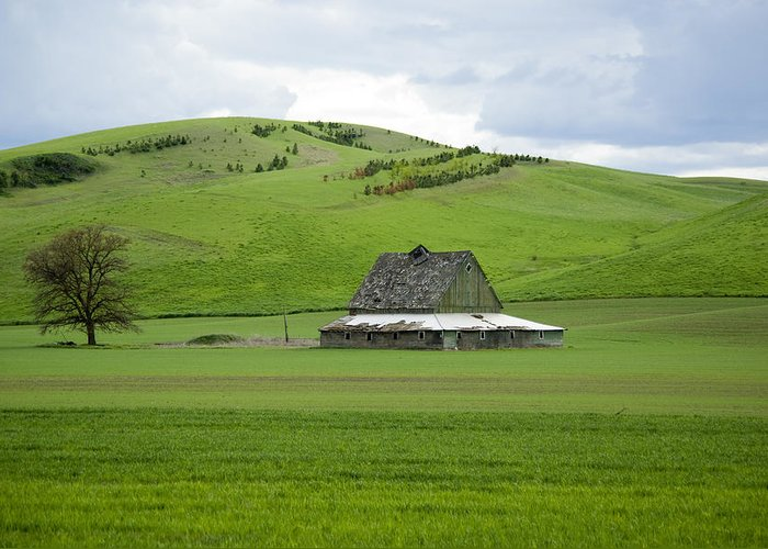 Palouse Greeting Card featuring the photograph Palouse Old Barn by Louise Magno