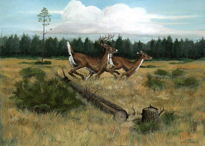 Whitetail Deer Greeting Card featuring the painting Panhandle Deer by Timothy Tron