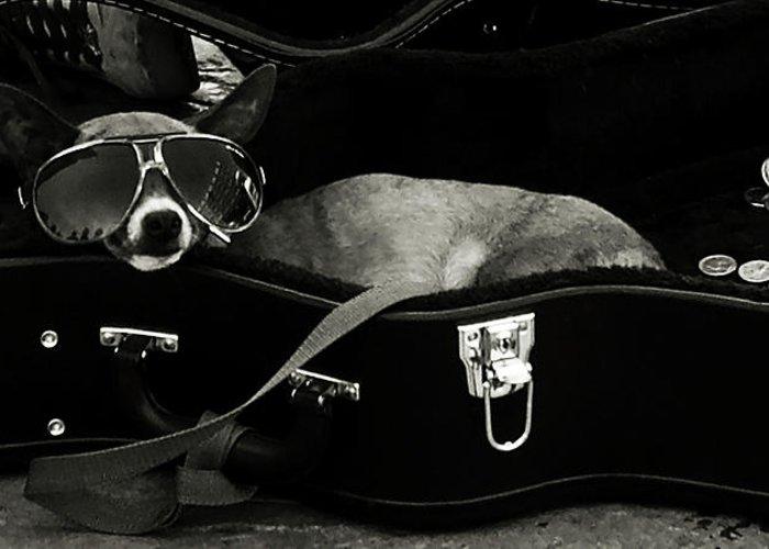 Dog Greeting Card featuring the photograph Panhandling Dog by Julie Niemela