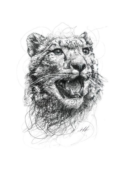 Leopard Drawings Greeting Cards