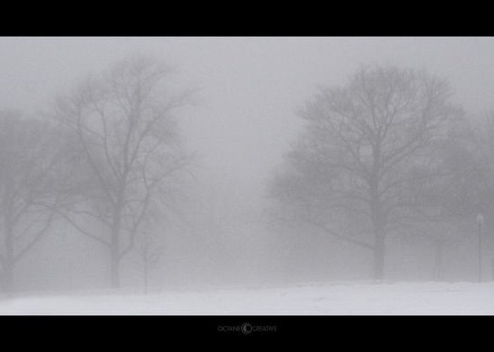 Fog Greeting Card featuring the photograph Park In Winter Fog by Tim Nyberg