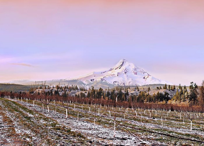 Orchard Greeting Card featuring the photograph Parkdale Dawn by John Christopher