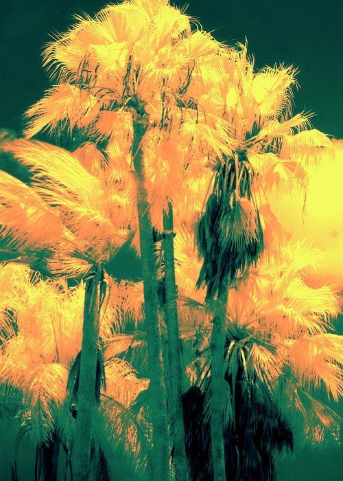 Palms Greeting Card featuring the photograph Parking Lot Palms 1 3 by Gary Bartoloni