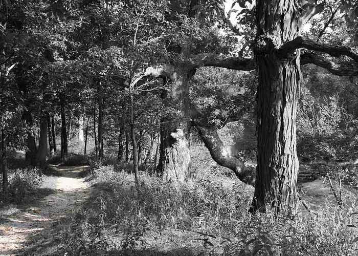 Nature Greeting Card featuring the photograph Parkland Trail by Dylan Punke