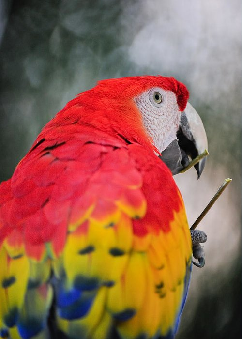 Parrot Greeting Card featuring the photograph Parrot Head by Tom Dowd